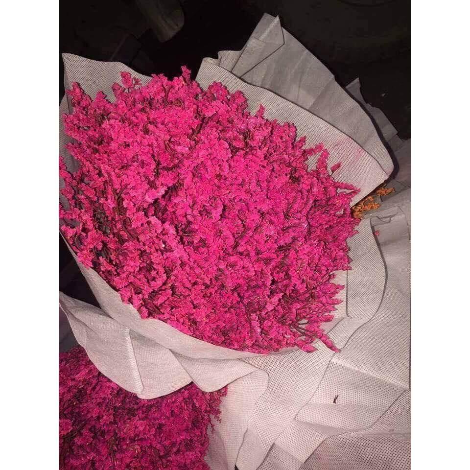 hoa sao khô hồng