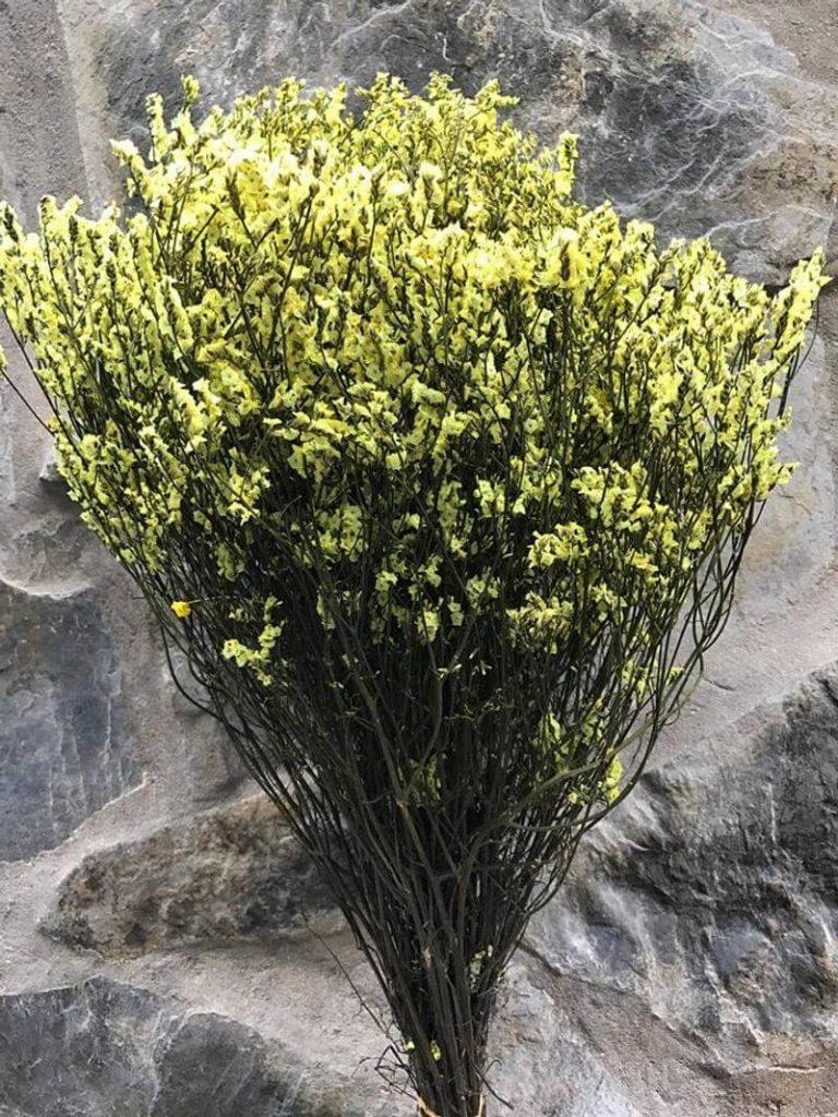 hoa sao khô vàng