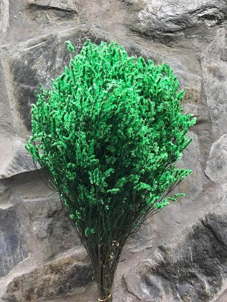 hoa sao khô xanh lá cây